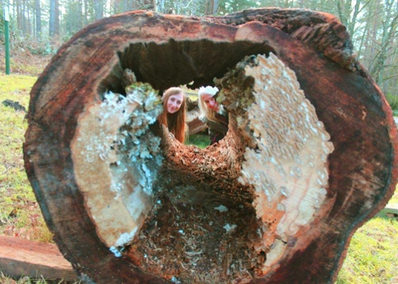 Emma Gilmartin and Professor Lynne Boddy are studying beech heart rot